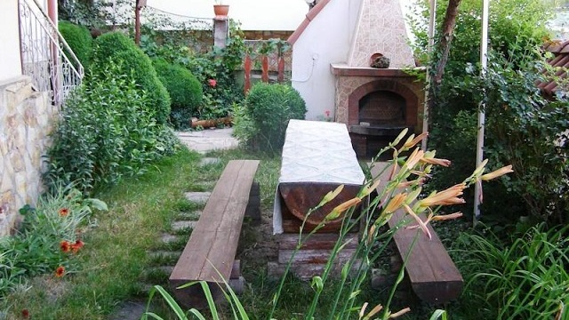 garden_old_vine.jpg