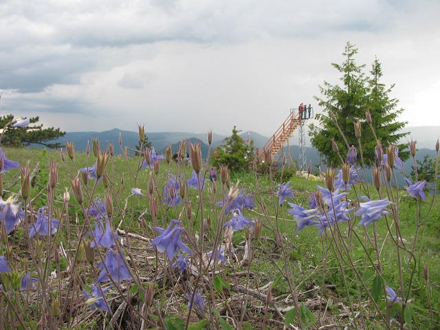 western_rhodopes_flowers