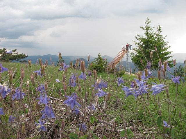 western_rhodopes_flowers
