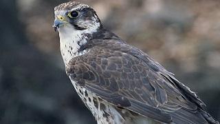 rare_birds